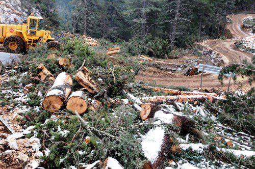 Toroslardan Lübnan dağlarına sedir ağaçları nasıl yok edildi