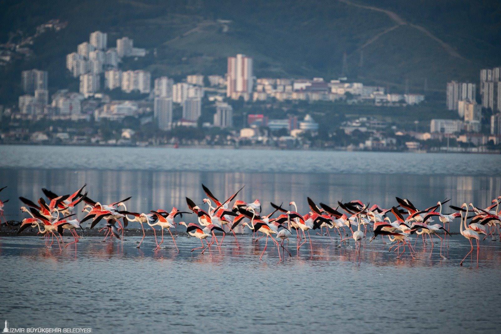 Bir ilk: İzmir'in Yeşil Şehir Eylem Planı hazırlandı
