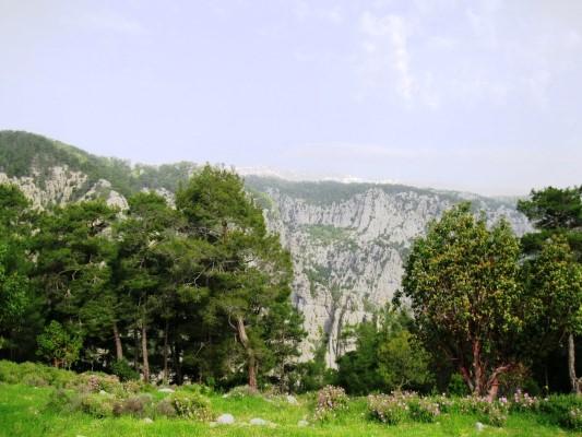 Milli parklarda orman kesimi kararı iflasın göstergesi!