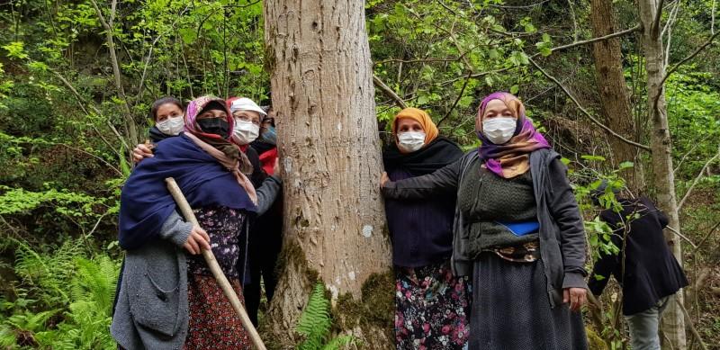 İkizdere'de taş ocağı uğruna 2 bin dekarlık orman yok olacak!